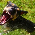 Dog Bites Attorney New Haven